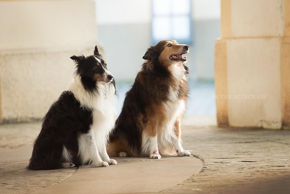 professionelle Hundebilder Fotoshooting in Stuttgar