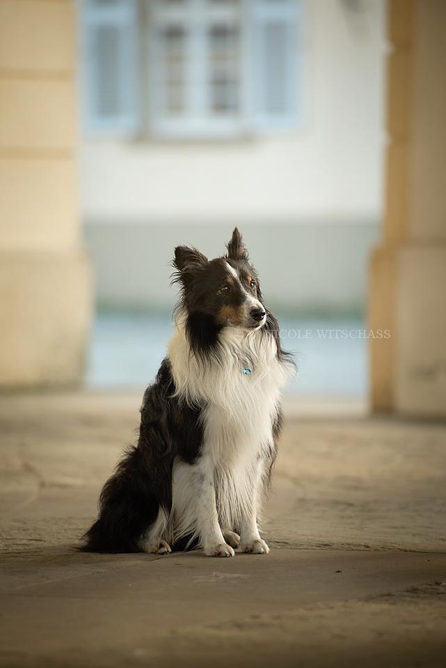 professionelle Hundebilder Fotoshooting in Stuttgart